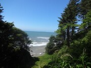 saltspray forest